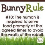 BunnyRule10