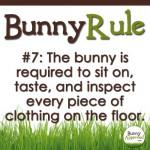 BunnyRule7