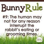 BunnyRule9
