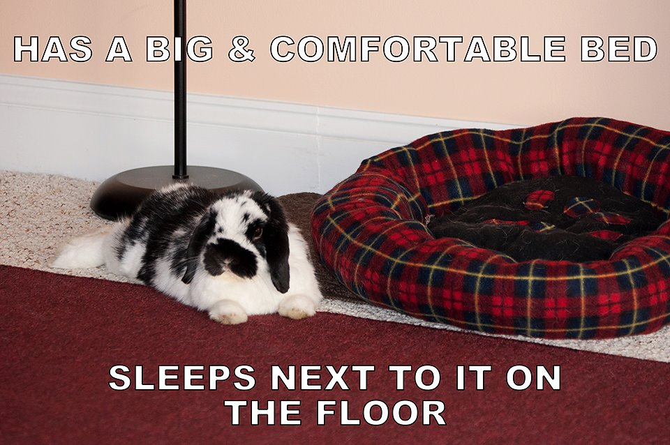 Funny Bunny 3