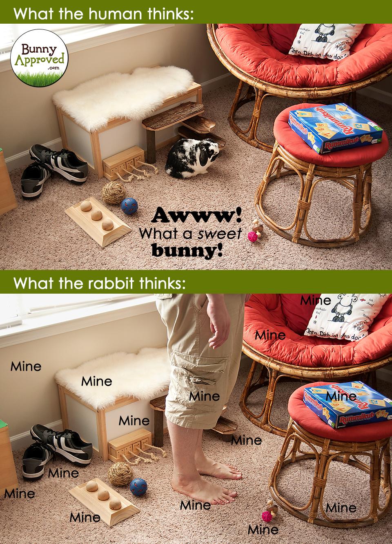 Rabbit Meme Sweet Bunny Mine