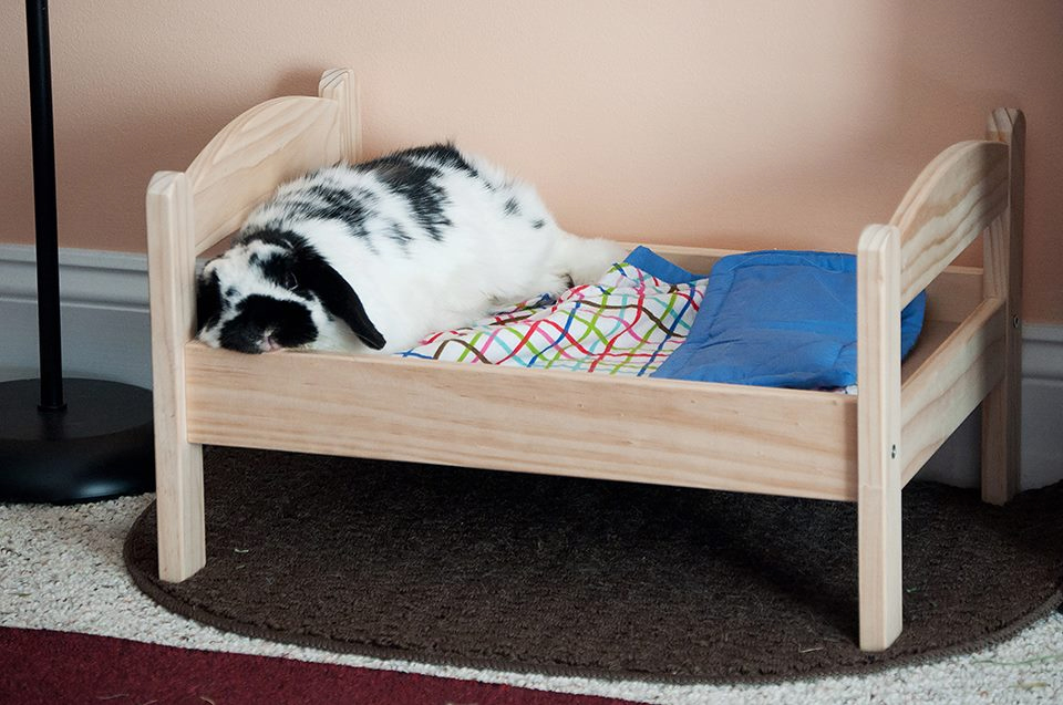 Bunny all flopped over on his bed.