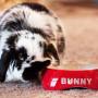 BunnyBowl2