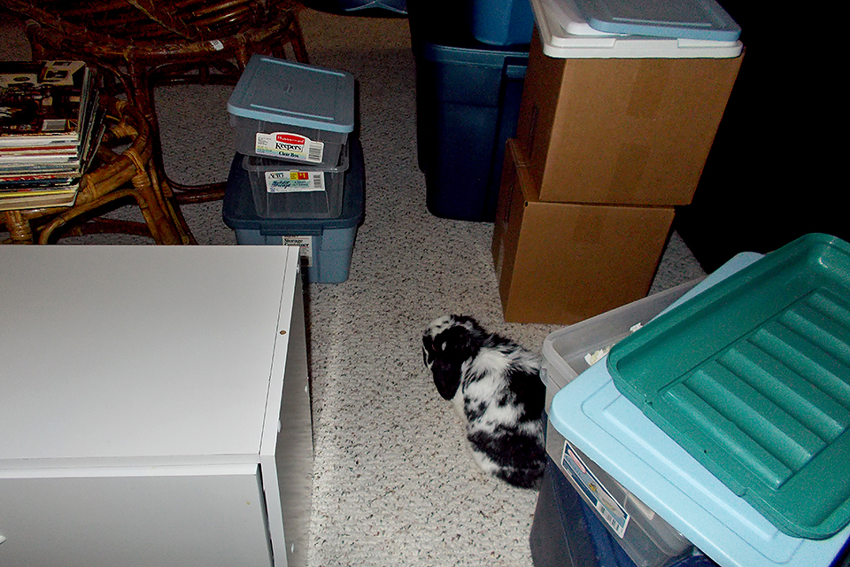 Our organized chaos - and Bunny right in the middle of it.