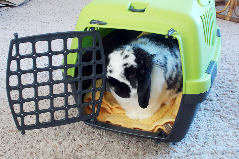Bunny in Carrier