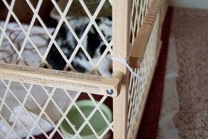Rabbit Playpen out of Baby Gates