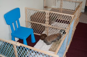 Rabbit Playpen out of Baby Gates2