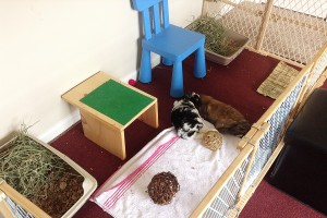 Bunnies Cuddling in their Playpen