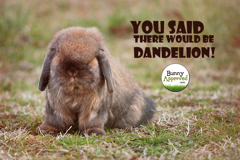 No Dandelion