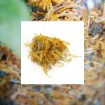 Starwest Botanicals Calendula