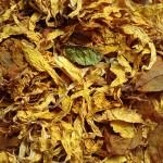 Sunflower Petals CU